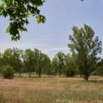 Terrain vu pour vous à Lieuran les Béziers 34290